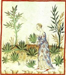 Kvinne som sanker legende urter. Kunnskap om legeurtenes bruksområder gikk i arv fra mor til datter. (Italiensk manuskript fra det 15. århundre.)