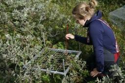 Telling av arter i buret