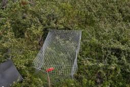 Et bur til å fange planter i