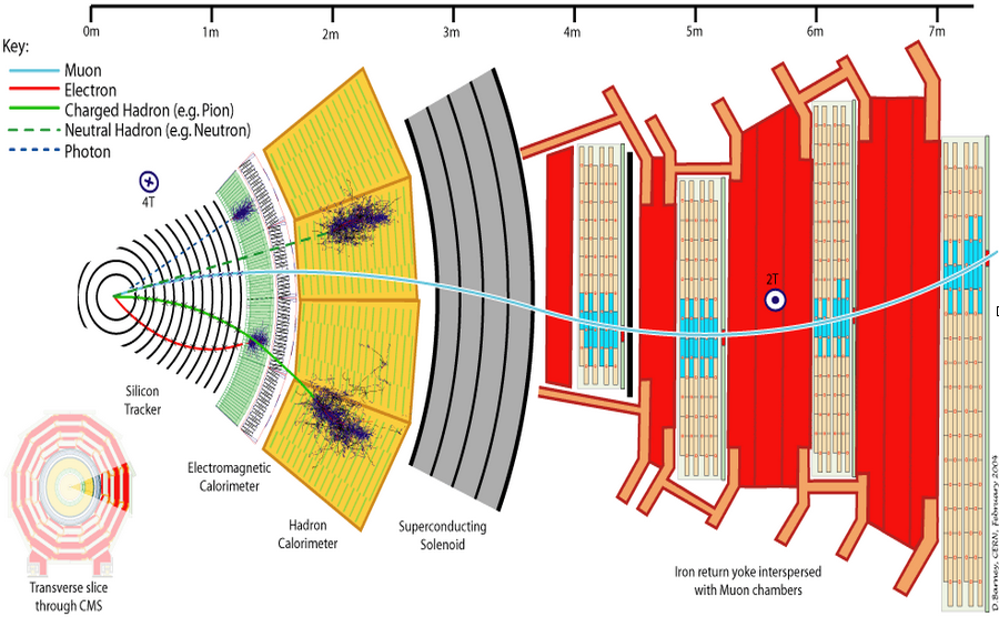 Utsnitt av CMS-detektoren ved CERN
