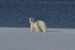 Svalbards konge