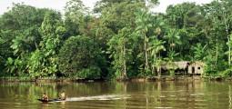 Amazonas (Foto: Francisco Chaves)