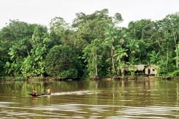 Amazonas,Brasil (Foto:Francisco Chaves)