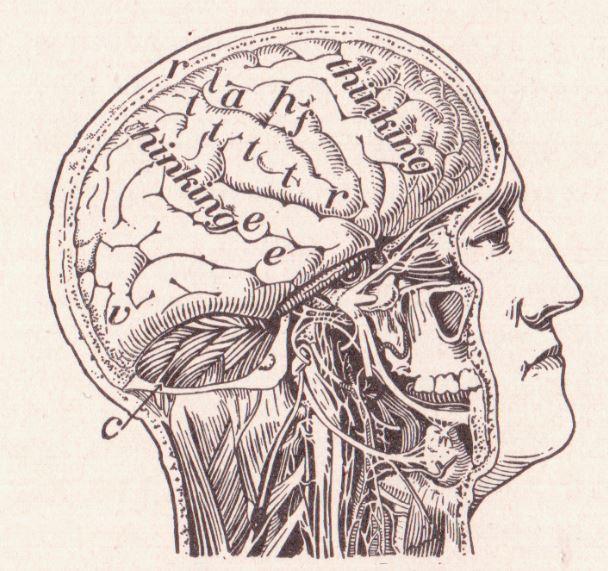 Å tenke i begreper ansees av mange som kilden til kunnskap om verden. Tyler Burge er uenig. Illustrasjon: The Human Body and health (1908)