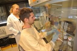 Arbeidet foregår ofte i en cellebenk for å unngå kontaminasjon.