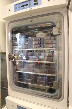 Inkubator der flasker med celler dyrkes.