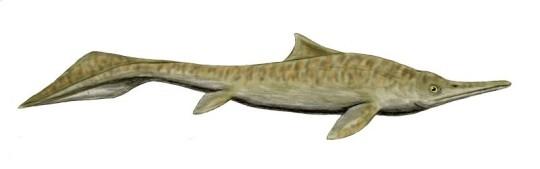 Illustrasjon av Mixosaurus, en av de mer kjente fiskeøglene fra trias. Kan det være sånn her fiskeøglene fra Svalbard har sett ut? Figur av Nobu Tamura, Wikimedia Commons.
