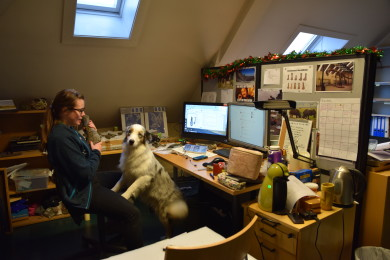 Kollega Aubrey må holde fast i svaneøgleluffen hun studerer. hvis ikke vil hunden Mew gjerne slikke på den.
