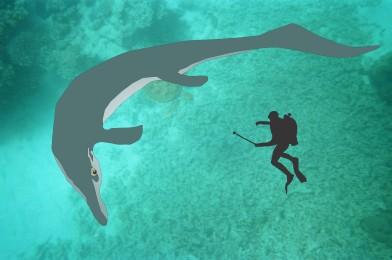 En tegning av fiskeøglen Cymbospondylus som svømmer rundt en dykker.