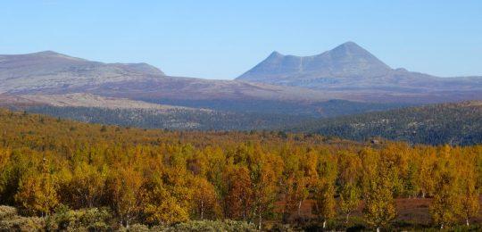 Stor-Elvdal natur fjell utmark