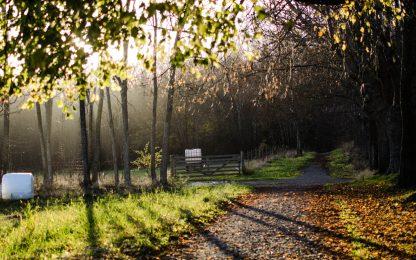 Skog i høstsol